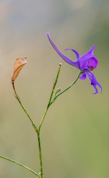 Natura/Ramsar