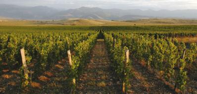 Şarap yolları